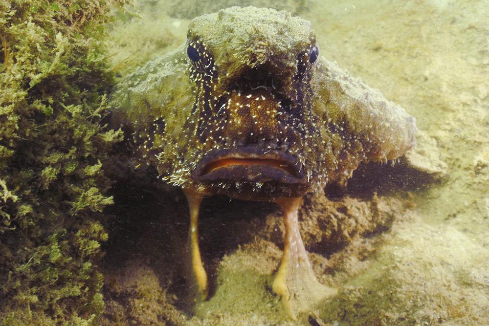 zeevleermuis