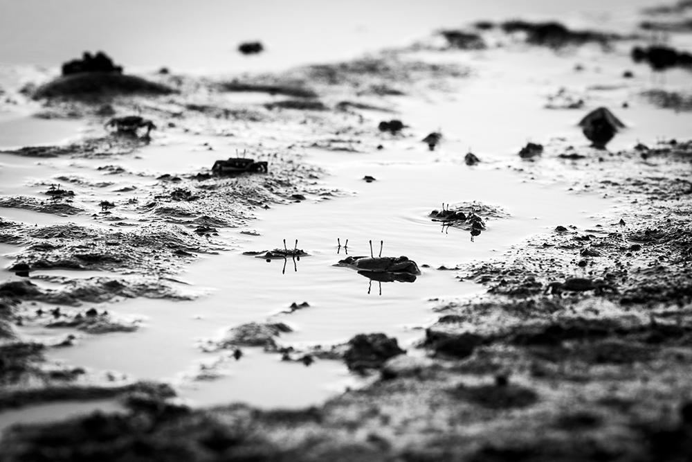 el nido krabben