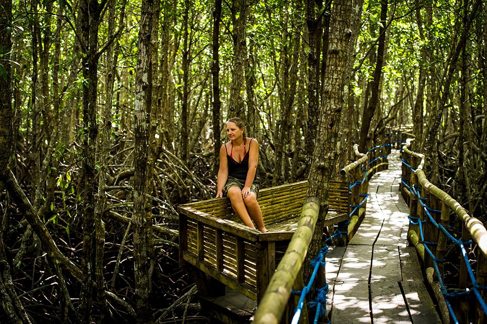 mangrove, palawan