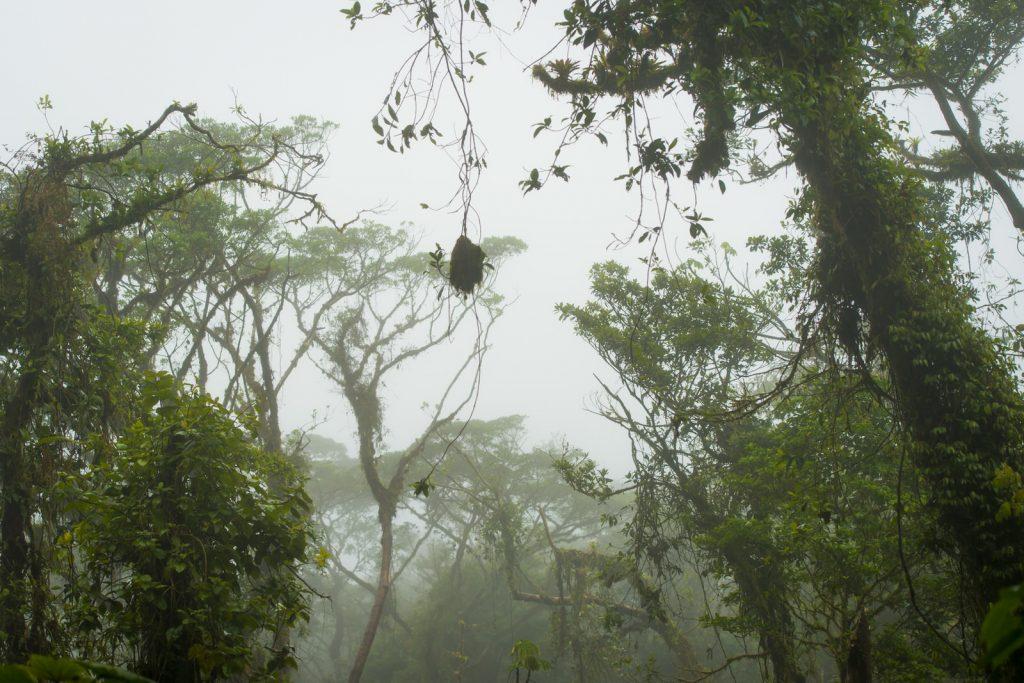 Santa Elena Bosque