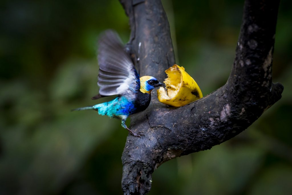 Oasis Eco park, Fortuna, Costa Rica