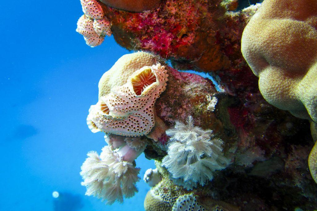 Rif Egypte, red sea diving safari