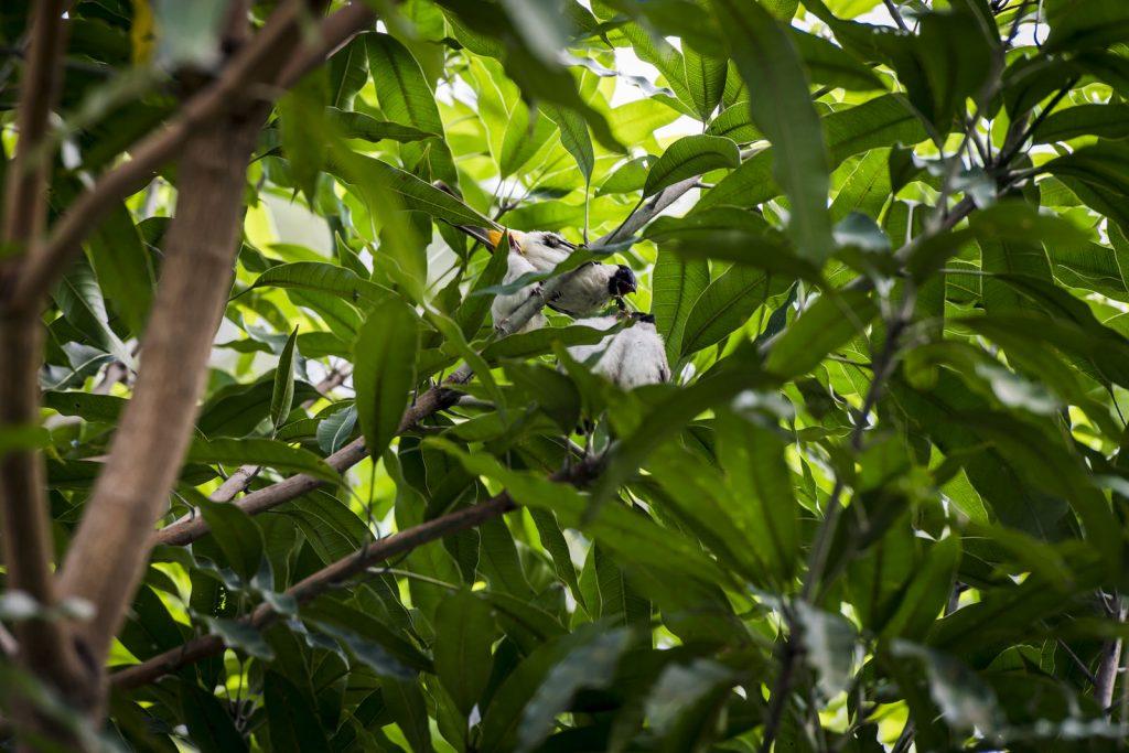 vogeltje bij Junia gueshouse
