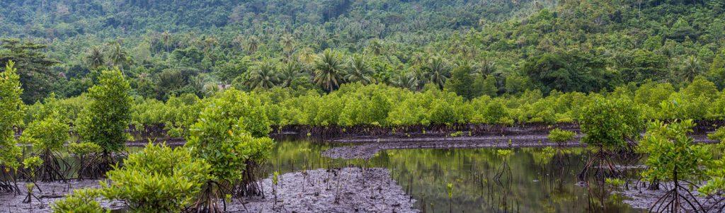 mangrove pulau weh