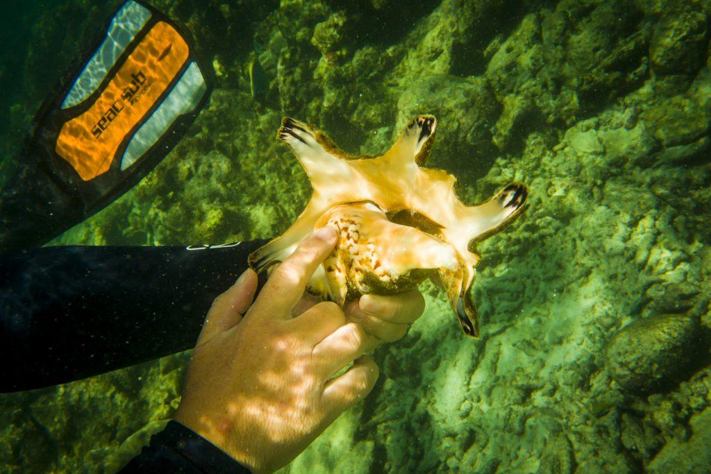 schelp met slak