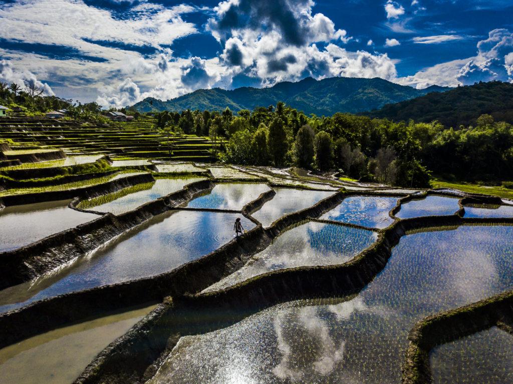 rijstvelden richting moni