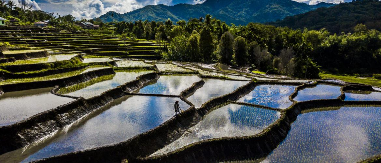 rijstvelden moni