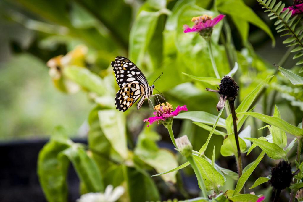 vlinder labuan bajo