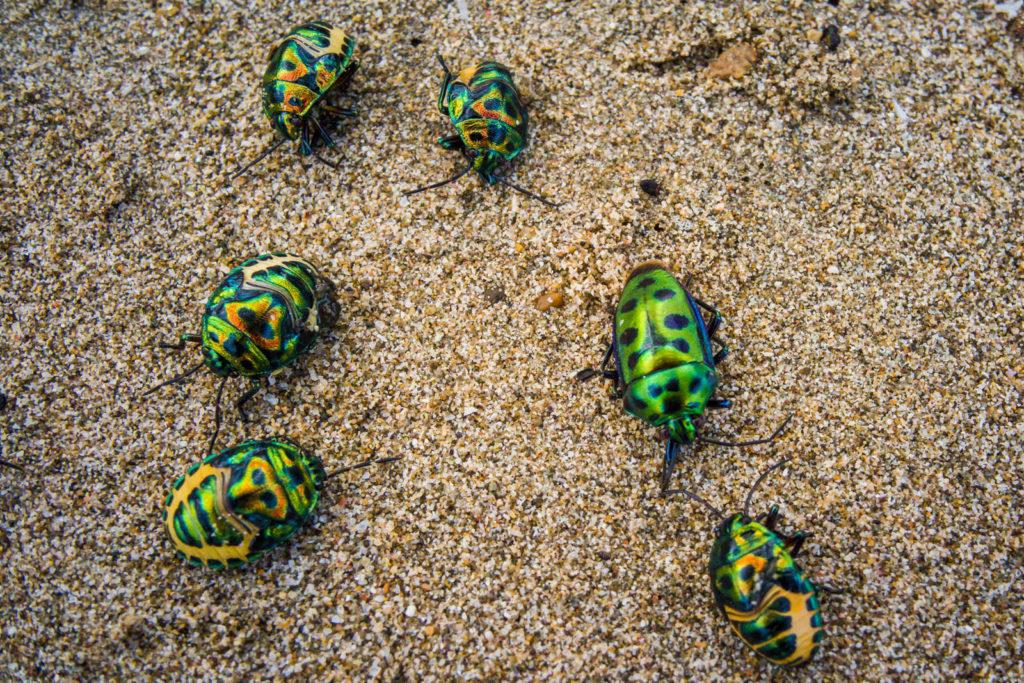 Torretjes op het strand